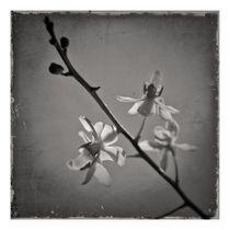 Orchidaceae2 by ricardo junqueira