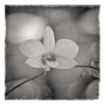 Orchidaceae1 by ricardo junqueira