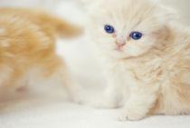 Cats by Burçin Esin