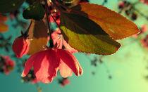 Afternoon Delight von Kitsmumma Fine Art Photography