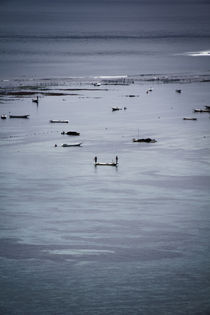 Seaweed farmers at high tide by Darren Martin