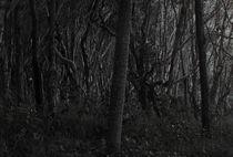 Dark Forrest von Darren Martin