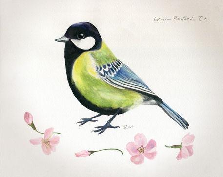 Green-backed-bird-rgb