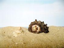 Am Strand von Maria-Anna  Ziehr