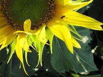 The sun and the bee von artisciocca