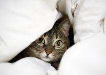 cat  by George Kavallierakis