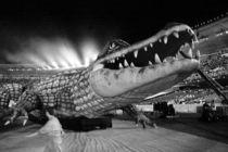 Croc! von Reinaldo Smoleanschi