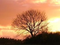 Meinbaum