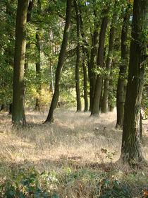 Waldeindrücke im Herbst by Ka Wegner