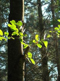 Waldeindrücke by Ka Wegner