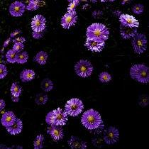 flower power von Max Nemo Mertens