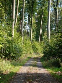 Waldweg by Ka Wegner