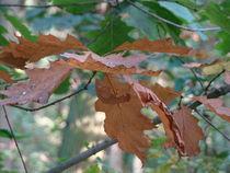 Herbstblätter von Ka Wegner