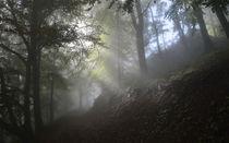 MistikForest 2 von Bruno Santoro