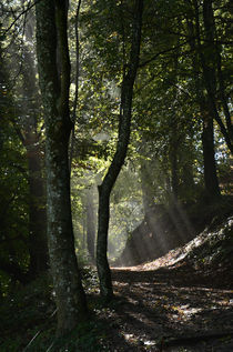 Forest light von Bruno Santoro