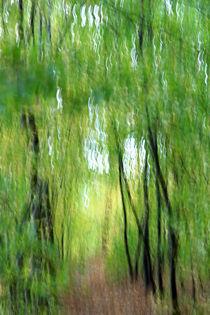 Waldimpressionen 1 von Wolfgang Dufner
