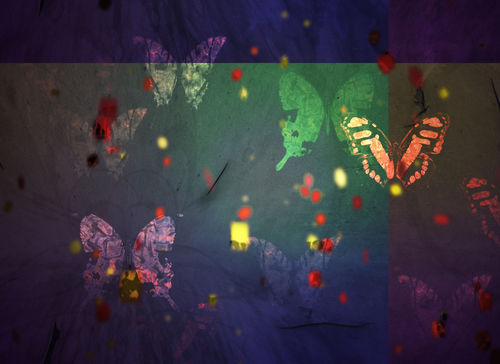 Butterfly-original-00000