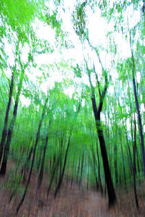 Waldimpressionen 3 by Wolfgang Dufner