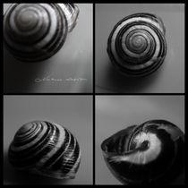Shells  von mira-arnaudova