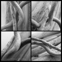 Old wood  by mira-arnaudova