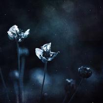 silence by Antonia Weber