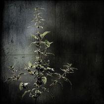 grow by Antonia Weber