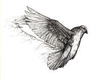 Dove by Mikael Biström