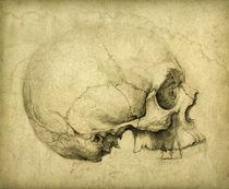 Skull Study by yaroslav-gerzhedovich