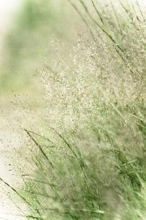 tender grasses von Beatrice Amberg