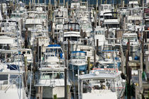 Cape May Marina, New Jersey, USA von John Greim