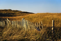 Weathered Dune Fence by John Greim