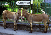 Two donkeys by a public toilet sign, Ireland von John Greim