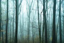 Misty forest. von John Greim