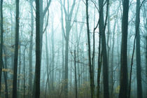 Misty forest. by John Greim