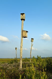 Birdhouses in salt marsh, Cape Cod, USA by John Greim