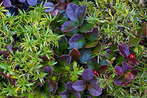 Autumn Ground cover. by John Greim