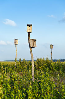 Birdhouses in salt marsh, Sandwich, Cape Cod, USA by John Greim