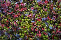 Colorful autumn groundcover. by John Greim