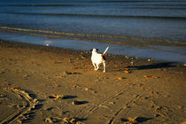 Beach Dog. by Keith Cheung