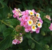 One pink flower  by Alkisti *