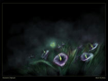 night flowers by Panagiota Tsimpalidi
