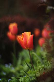 Red Tulip von Kerim Heper