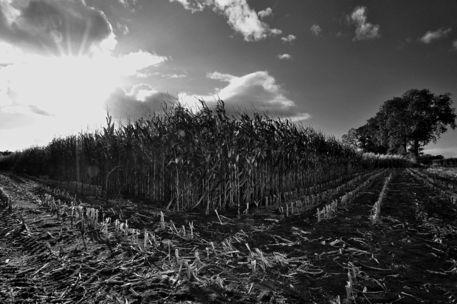 Agriculture-landscapes