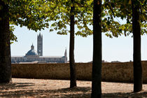 Duomo, Massa Marittima von Michael Schickert