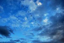 Blue Birds von Boris Chernykov