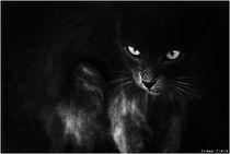 Diablo by Erdem CIRIK