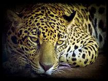 Jaguar (Panthera onca) by Juan Carlos Lopez