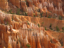 Hoodoos in Bryce Canyon. USA, Bryce Canyon National Park by Irina Moskalev