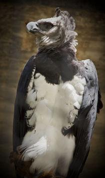 Harpy Eagle by Juan Carlos Lopez