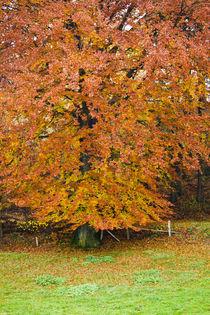 Tree7849